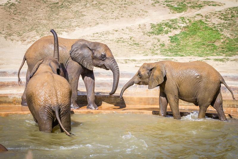 SD Zoo 2016-219