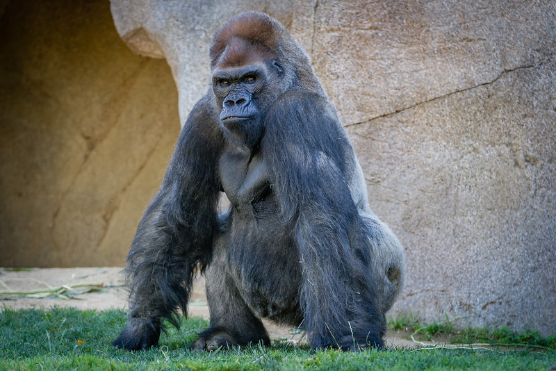 SD Zoo 2016-91