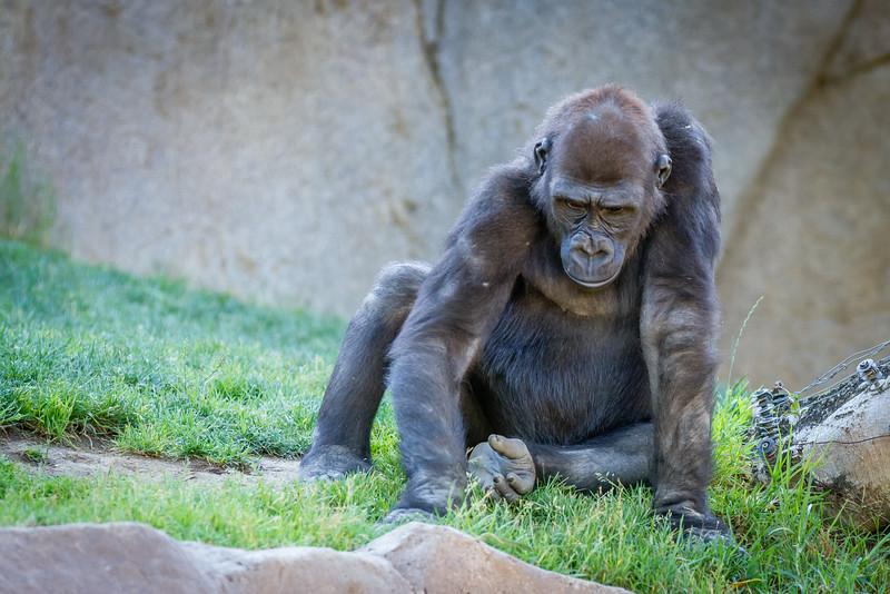 SD Zoo 2016-252