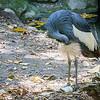 SD Zoo 2016-374