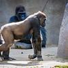 SD Zoo 2016-217