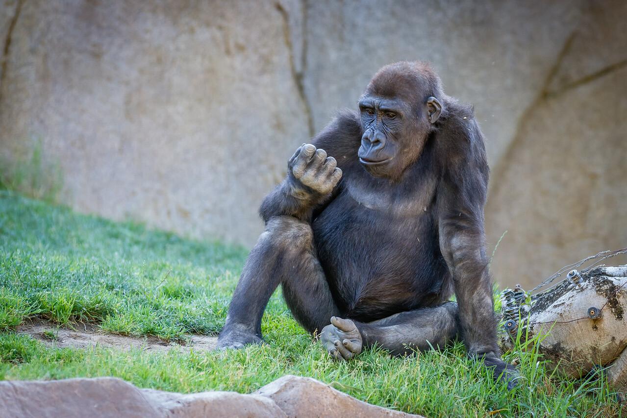 SD Zoo 2016-257