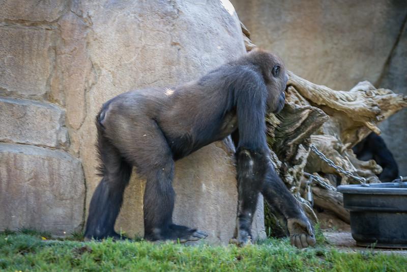 SD Zoo 2016-212