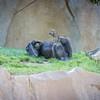 SD Zoo 2016-67