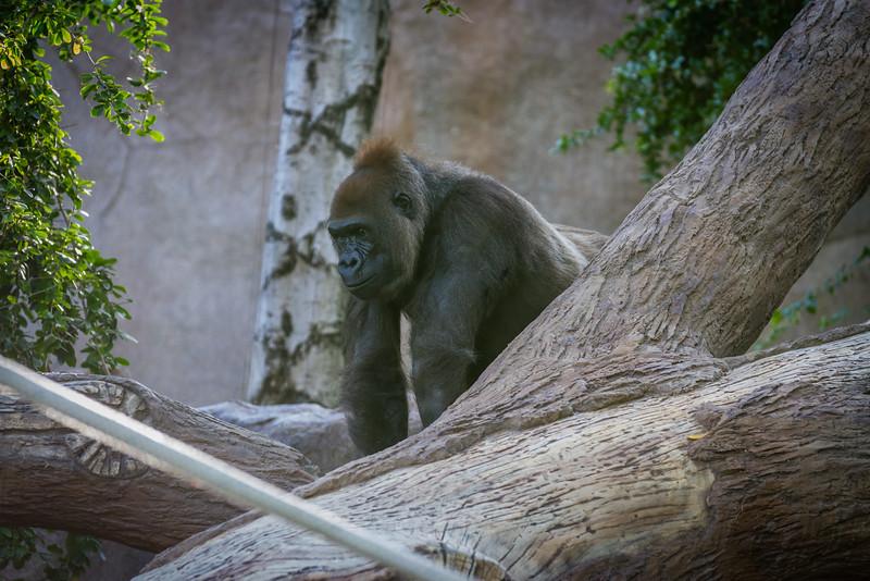 SD Zoo 2016-243