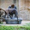 SD Zoo 2016-352