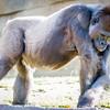 SD Zoo 2016-149