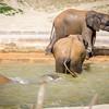 SD Zoo 2016-247