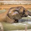 SD Zoo 2016-384