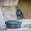SD Zoo 2016-109