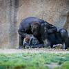 SD Zoo 2016-235