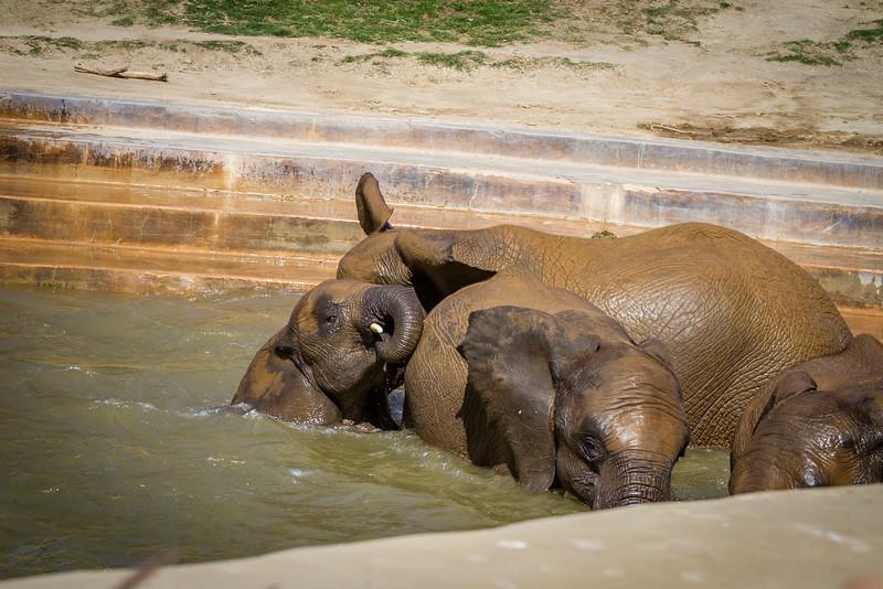SD Zoo 2016-338