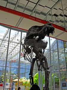 """T-Rex """"Greeter"""" at the Academy of Sciences museum at Golden Gate Park."""