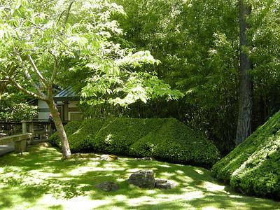 Start of our walk through the Japanese Tea Garden in Golden Gate Park.