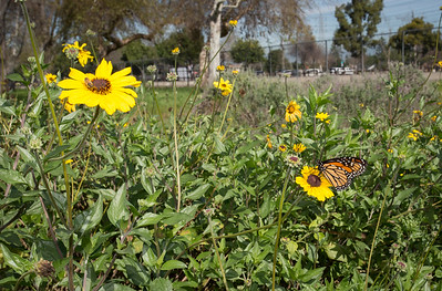 West San Gabriel River Parkway Nature Trail - Phase 1