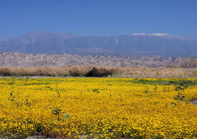 San Jacinto Wildlife Area with the San Bernardino Mountains in the background, March 10 2012.
