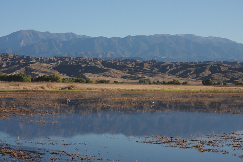 "One of the ""ponds"" near the back area, with the San Bernardino Mountains once again in the background, November 12 2010. You can barely make out Black-necked Stilts on the pond."