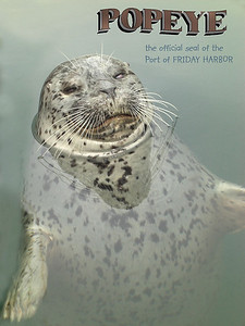 The one-eyed Harbor Seal  - resident of the Port of Friday Harbor, San Juan Island. April 16, 2009
