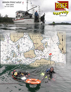Second dive of the REEF Survey in San Juan Islands. West side of Broken Point on Shaw Island. April 24, 2010