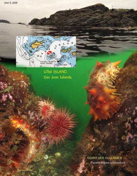 Plenty of sea urchins and sea cucumbers. Low Island, San Juan Islands. June 6, 2009