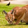 Sandi's Animals & Pets :