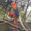 SLIGHTLY BLURRED, BUT BEAUTIFUL COLORS IN THOSE BIRDS (I'M FASCINATED AND FRIGHTENED OF BIRDS ALL AT THE SAME TIME).....IT'S A PHOBIA!!