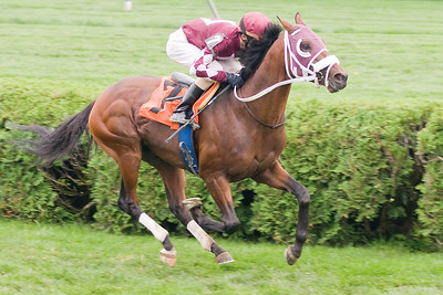 Ramon Dominguez rides Turn Up the Music to take the win during the 8th race Sunday afternoon. Photo Eric Jenks 9/4/11