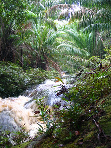 creek along the trail in bako national park