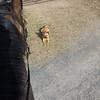 Sasha Riding Buddy-1040767