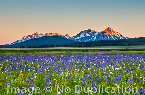 Sunset on the Sawtooth Mountains and a wildflower meadow, Idaho