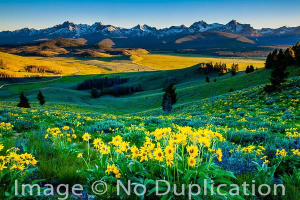 The Sawtooth Mountains and Arrowleaf Balsamroot, Idaho