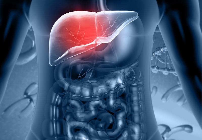 Human Digestive system Liver Anatomy. 3d render