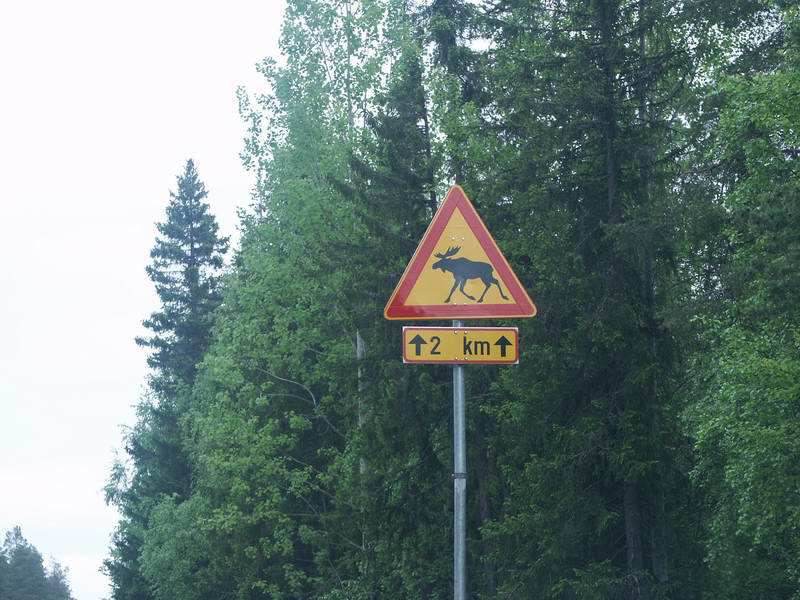 There were moose crossign signs all over Scandinavia.