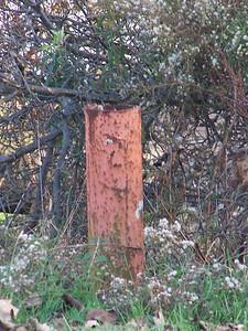 First well ,Scavenger Hunt 2012