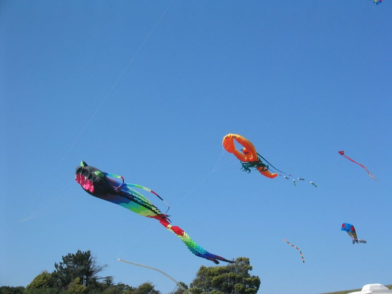 Flying scary fish, lobster, et al kites