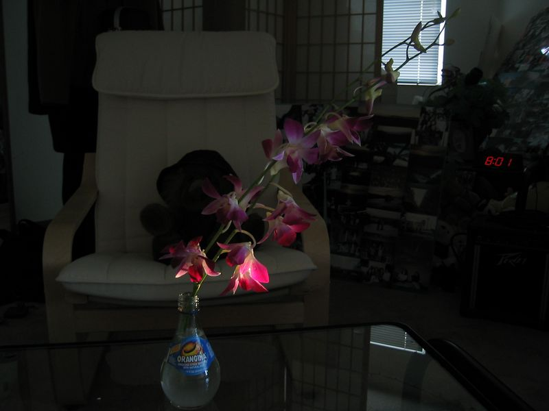 2003 10 18 Saturday - The Lion, the Orangina, & the Orchid