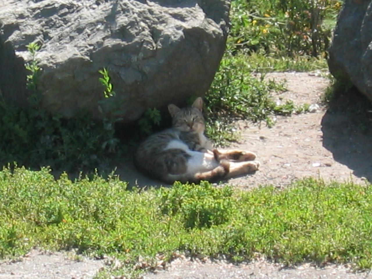 Meow @ Golden Gate Fields 5-9-03