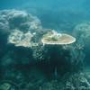Great Barrier Reef -  - Ribbon Reef #9