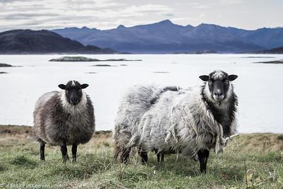19. Tussøya, Norway