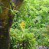 Fiji 2002