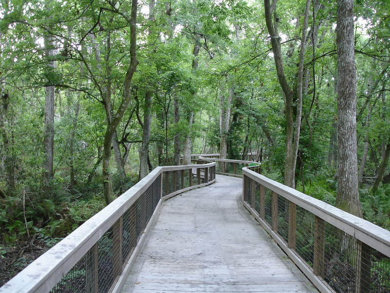 Brooker Creek Preserve, Tarpon Springs, Florida