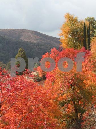 Scenic Oak Glen