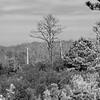College Creek black and white landscape.