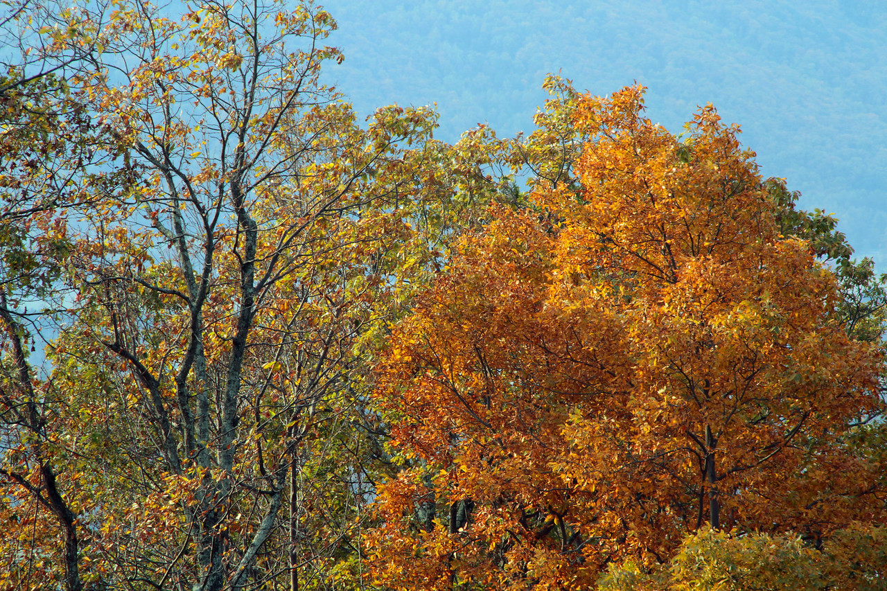 Fall in the Shenandoah