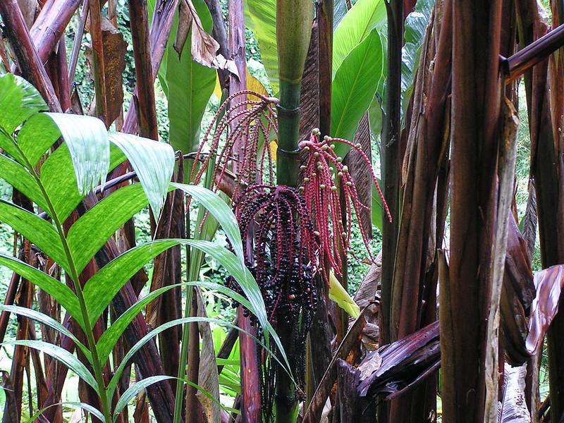 Undergrowth in Hawaii