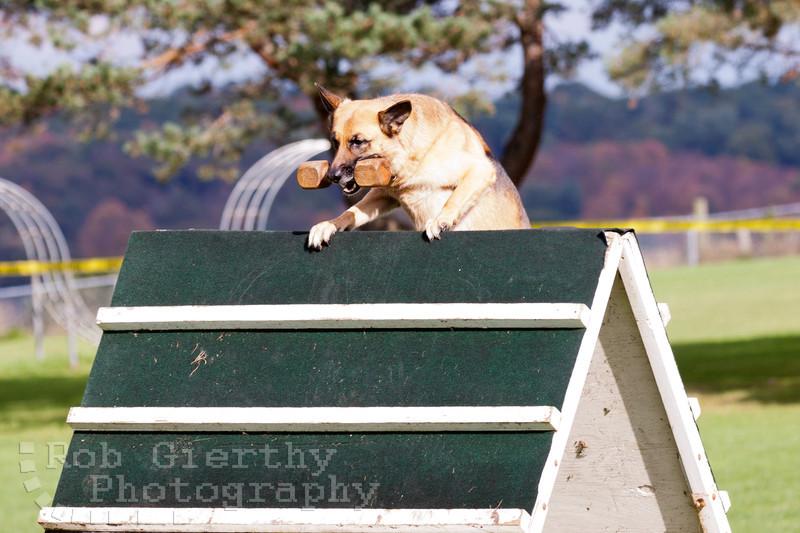 Interstate Schutzhund Club, Fall Trial 2011