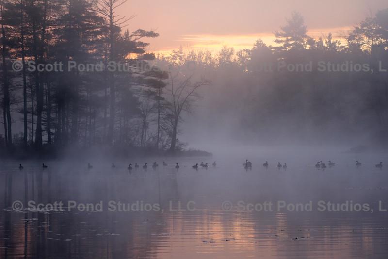 Scott Pond