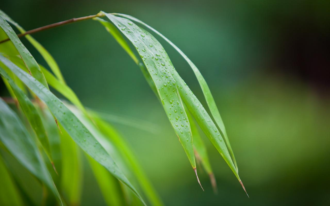 bamboo_bg_5616x3510px_calvinbradshaw_IMG_0026
