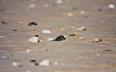 shells_bg_1920x1200_calvinbradshaw
