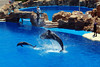 Whale & Dolphin Jumping